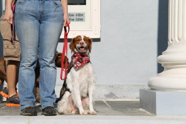 Saving Grace K9's dog in training